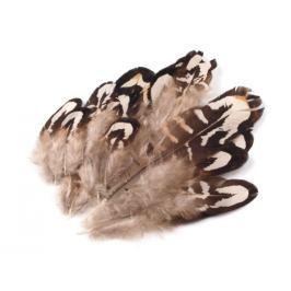 Bažantie perie dĺžka 4-10 cm šedobežová 10ks Stoklasa