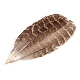 Bažantie perie dĺžka 10-18 cm hnedá sv. 5ks Stoklasa