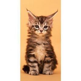 Osuška 70x140 - Kočka